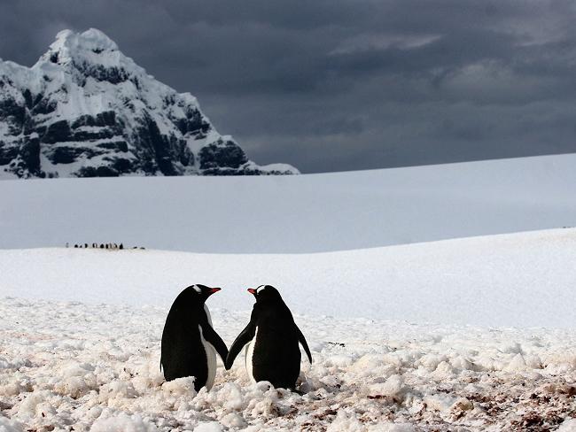 Ảnh avatar đôi chim cánh cụt