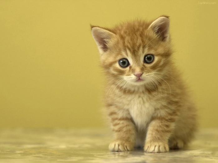 Ảnh đại diện mèo dễ thương