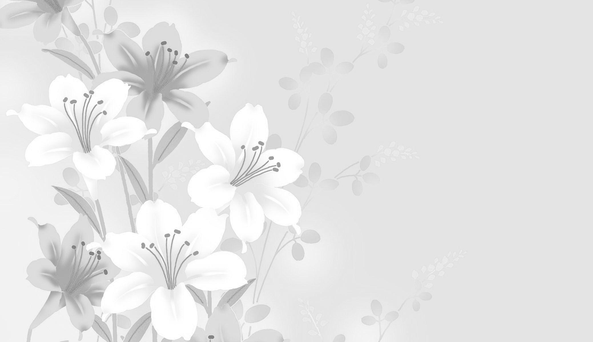Hình nền trắng đẹp (32)