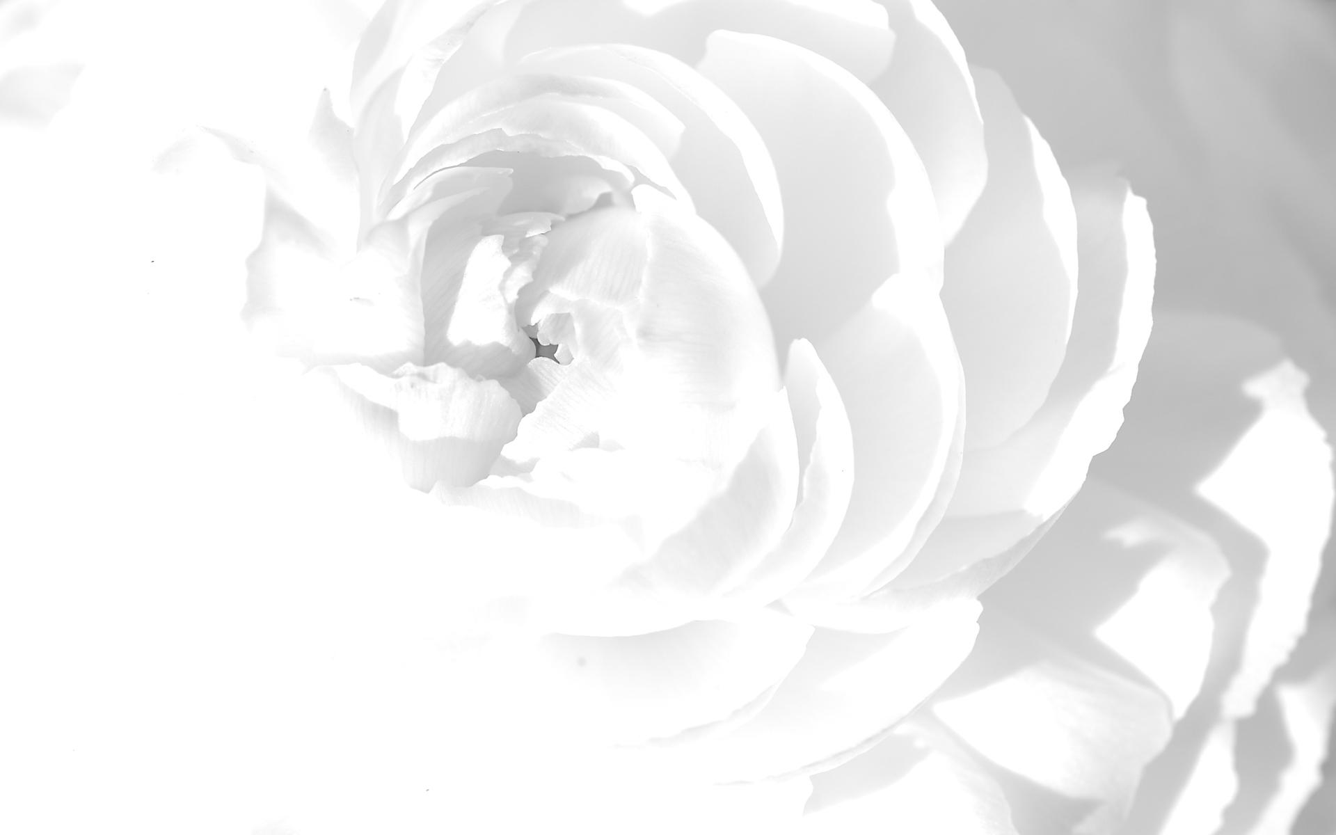 Hình nền trắng đẹp (36)