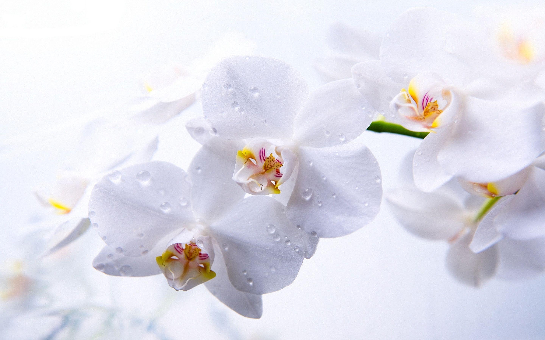 Hình nền trắng đẹp (63)