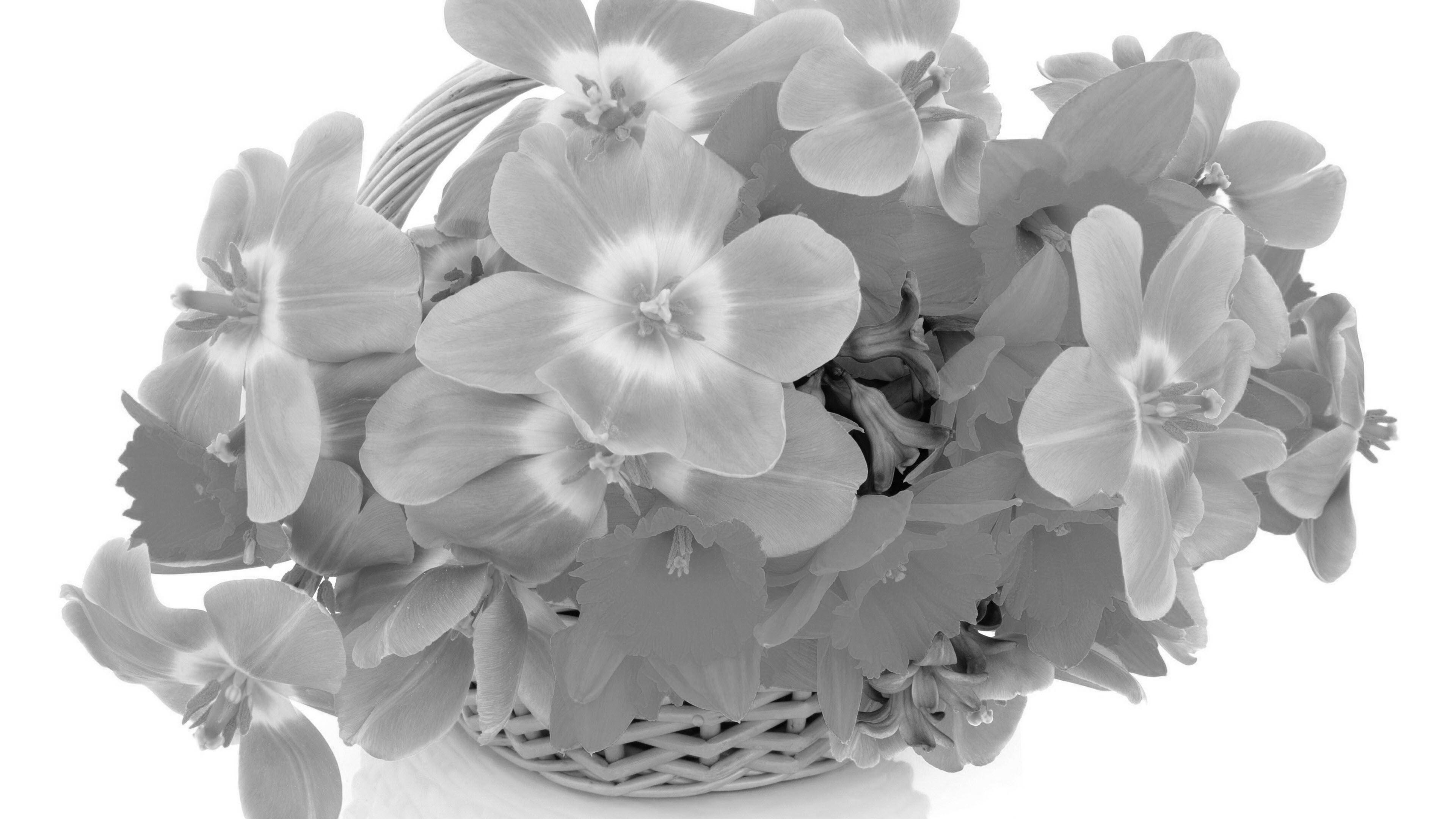 Hình nền trắng đẹp (80)