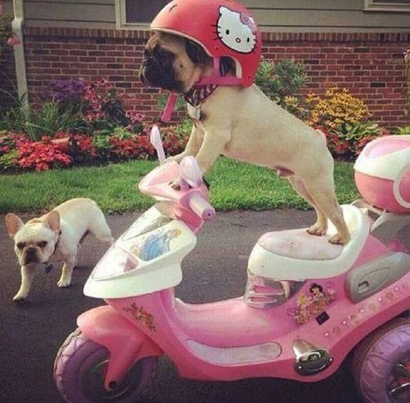Ảnh chó lái xe ngộ nghĩnh