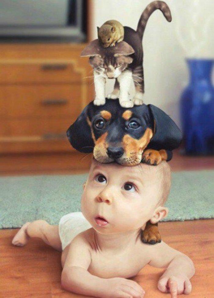 Ảnh chú bé cùng động vật ngộ nghĩnh nhất