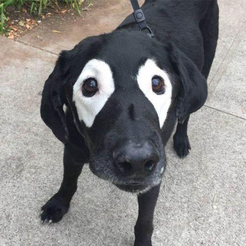 Ảnh chú chó ngộ nghĩnh