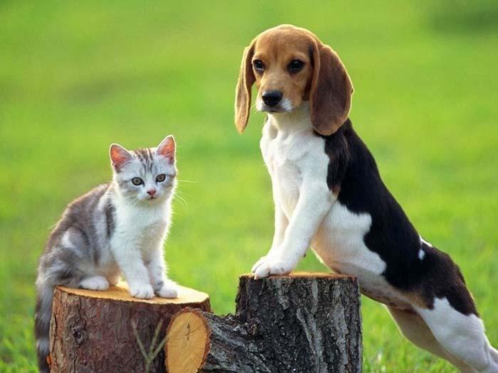 Ảnh chú cún và mèo ngộ nghĩnh