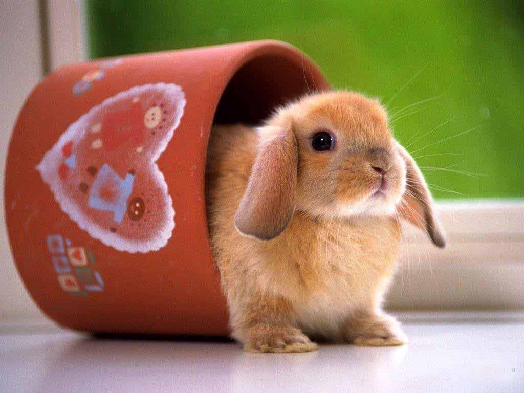 Ảnh chú thỏ trong cốc ngộ nghĩnh