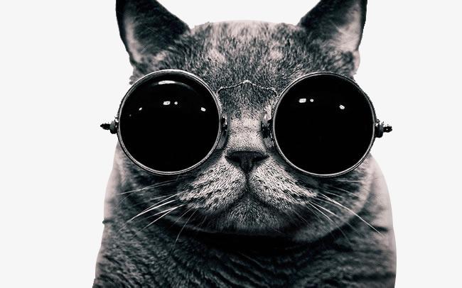 Ảnh mèo đeo kính ngộ nghĩnh