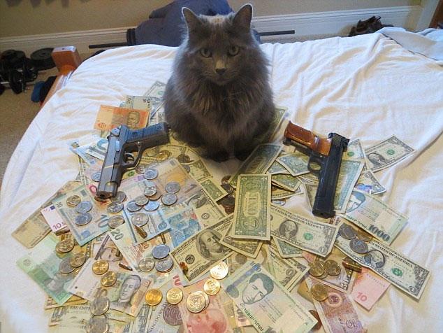 Ảnh mèo mafia ngộ nghĩnh