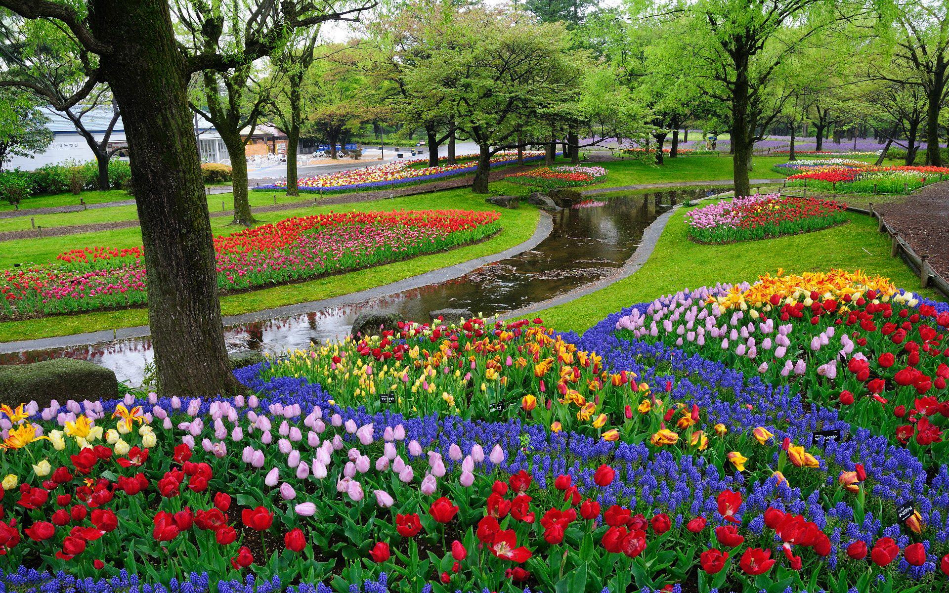 Hình ảnh đẹp về mùa xuân