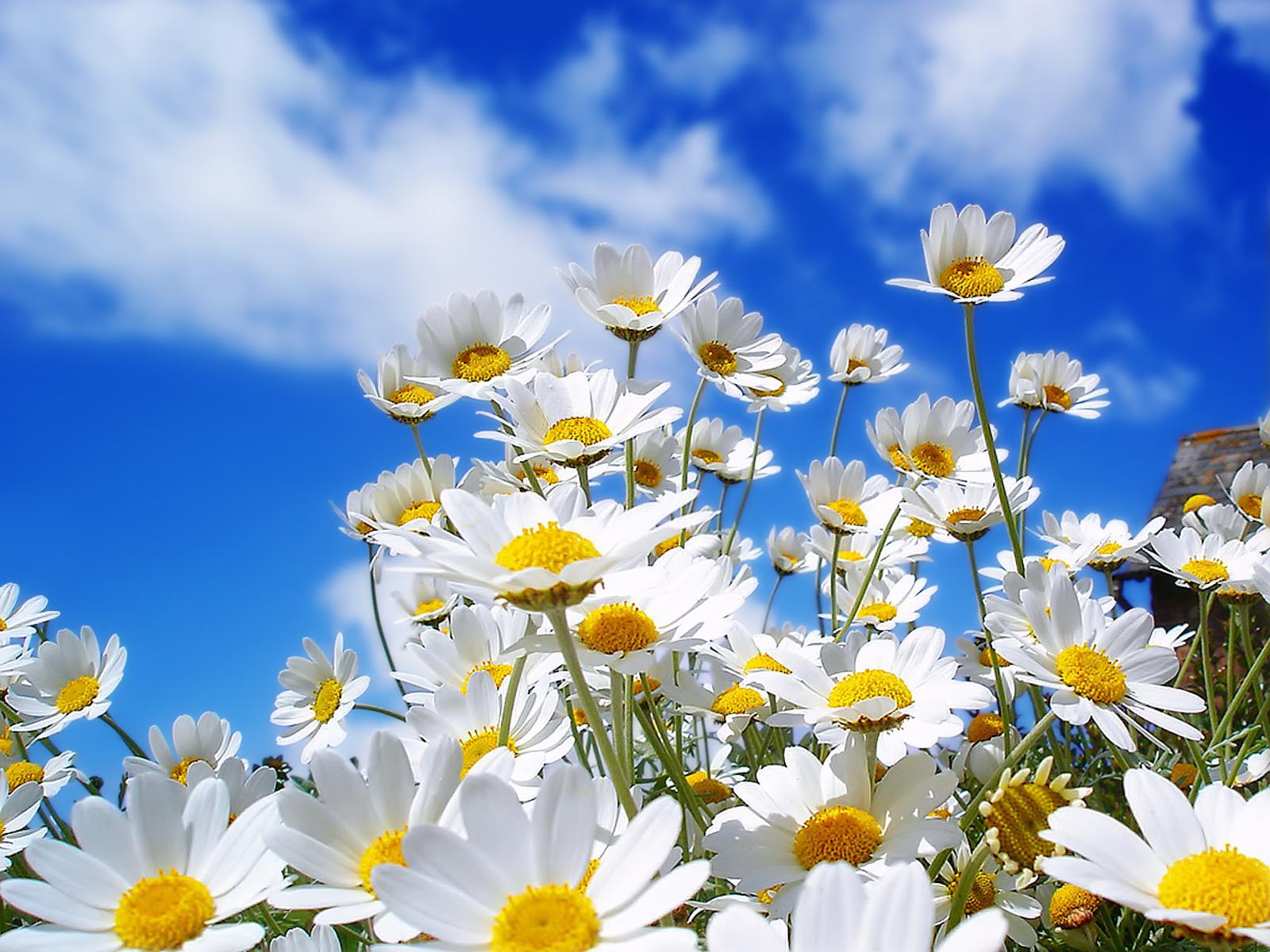 Hình ảnh hoa cỏ mùa xuân cực đẹp