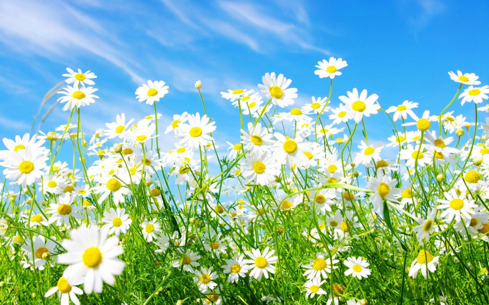 Hình ảnh hoa cỏ mùa xuân đẹp nhất