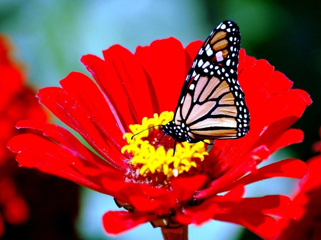 Hình ảnh hoa đẹp mùa xuân