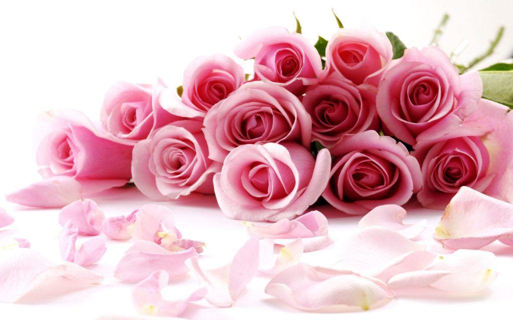 Hình ảnh hoa hồng trên bàn đẹp