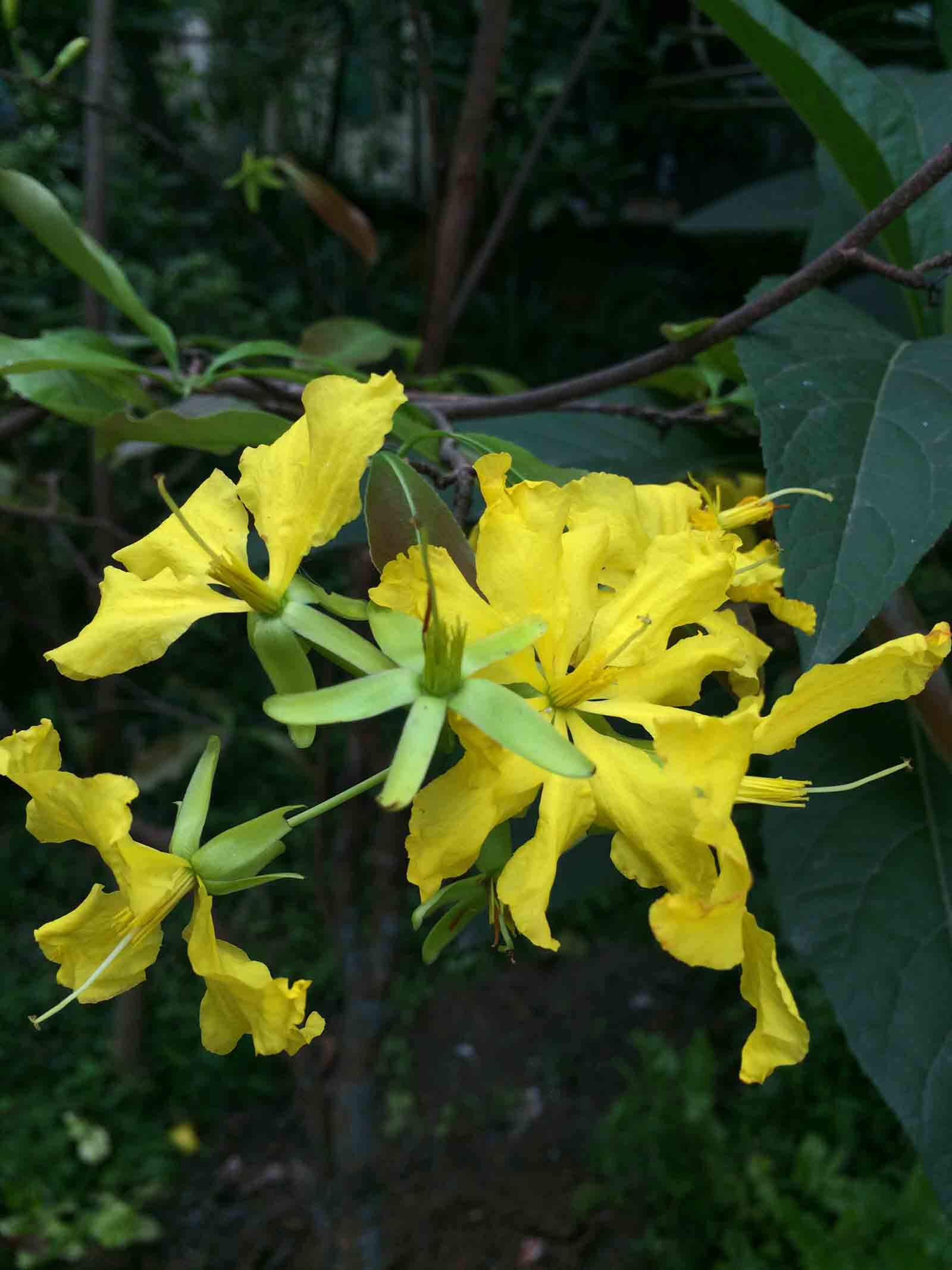 Hình ảnh hoa mai độc nhất