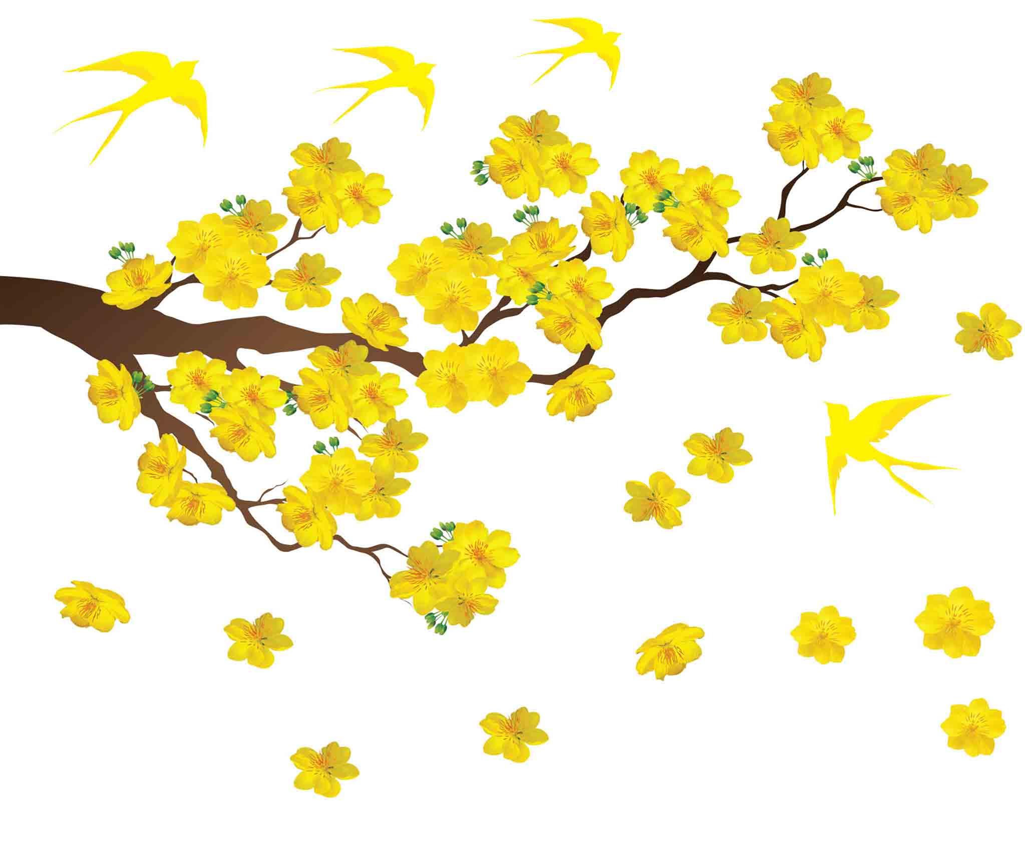 Hình ảnh hoa mai tết én vàng