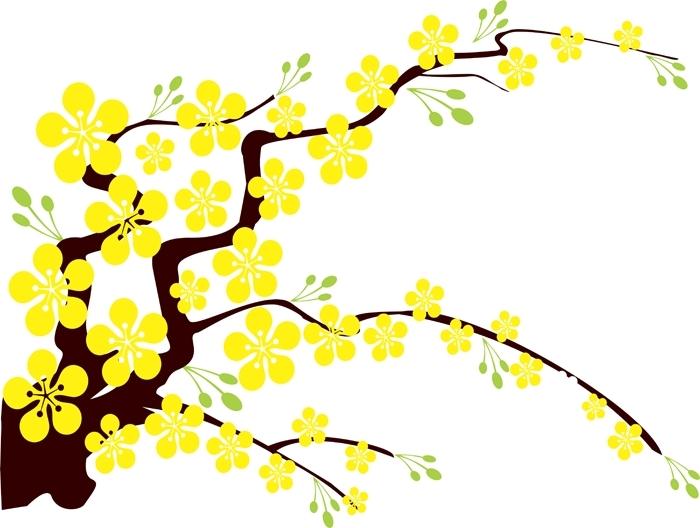 Hình ảnh hoa mai tết tranh vẽ
