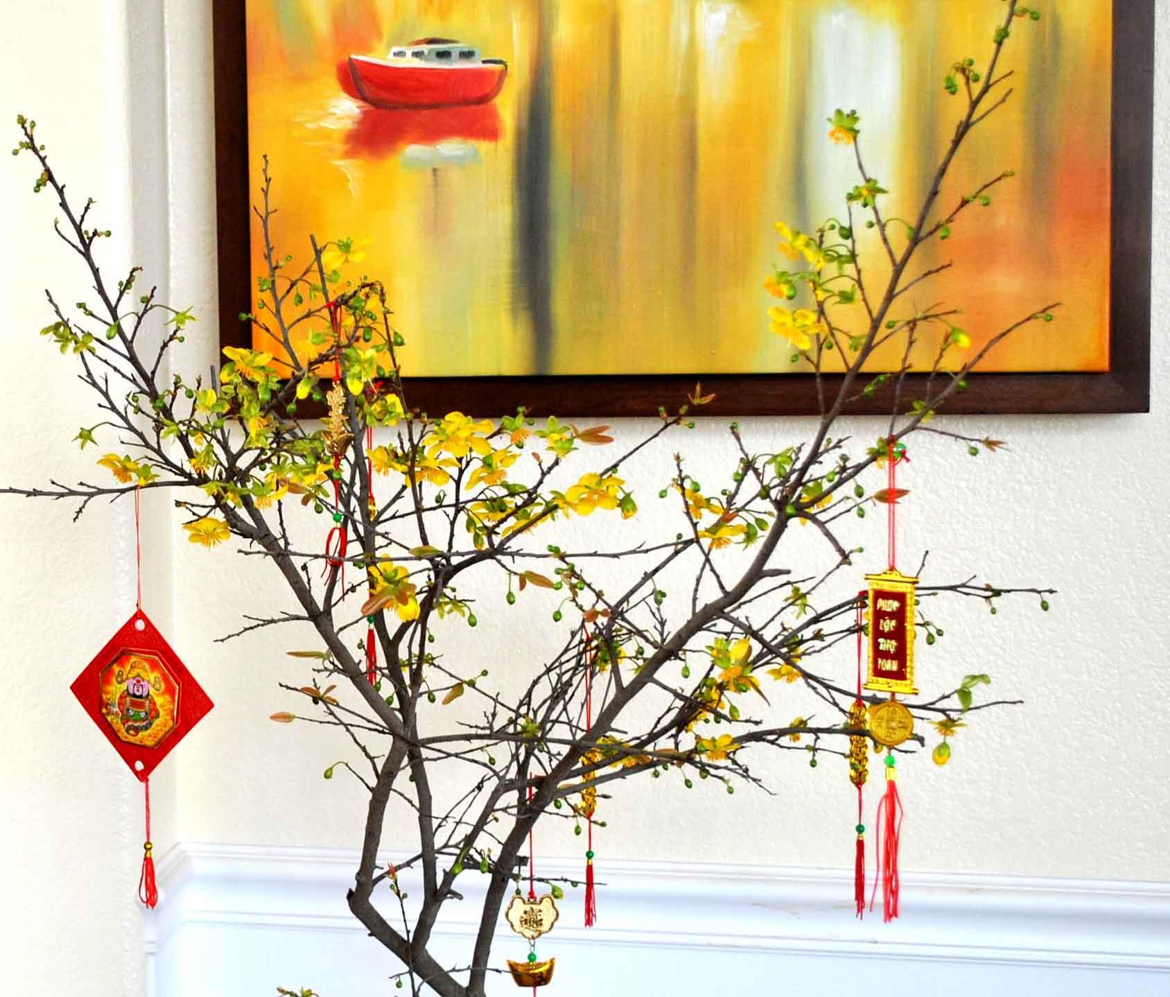 Hình ảnh hoa mai tết trong nhà