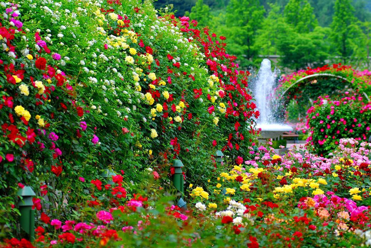 Hình ảnh hoa mùa xuân (2)