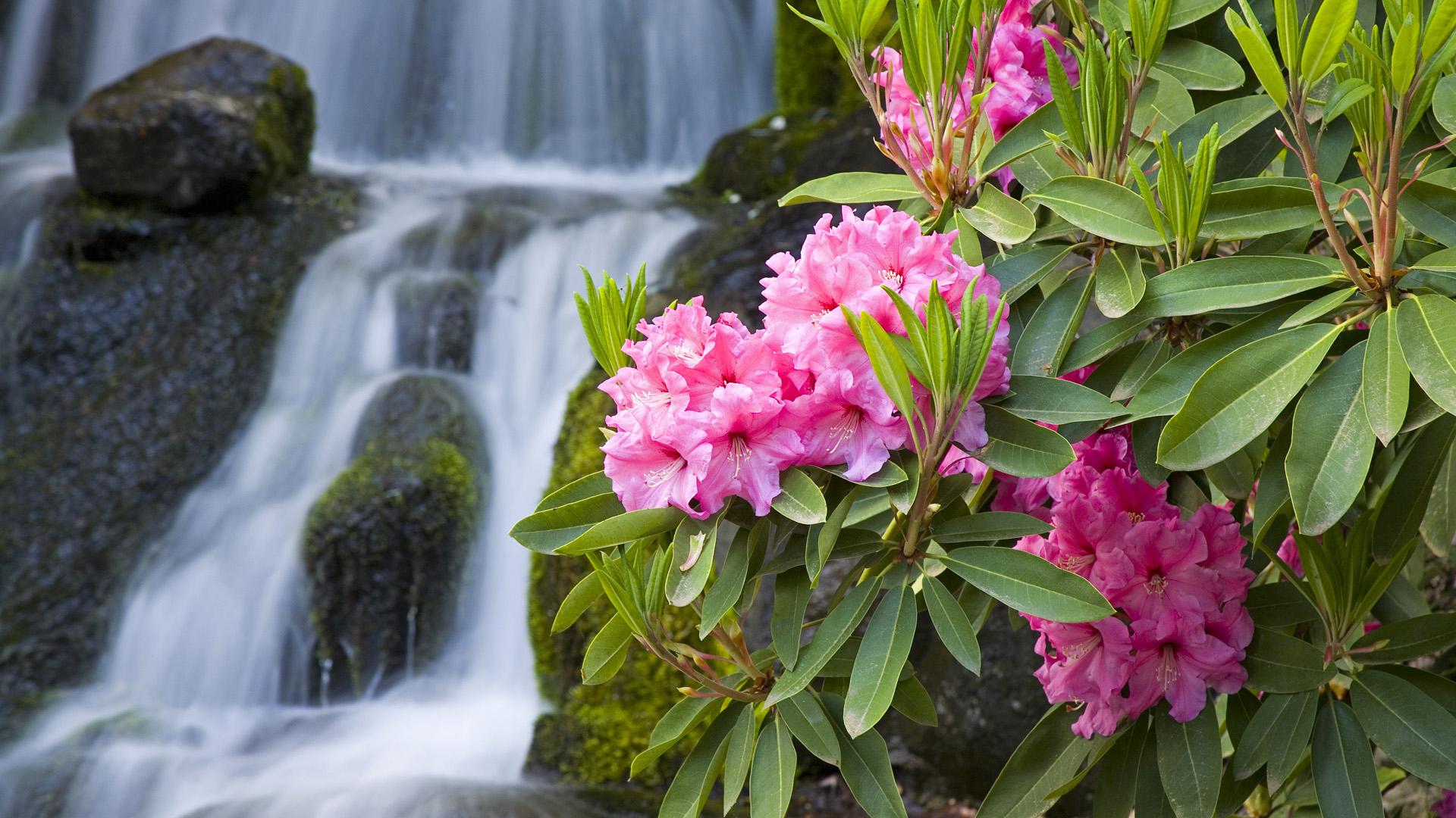 Hình ảnh hoa mùa xuân bên thác nước đẹp