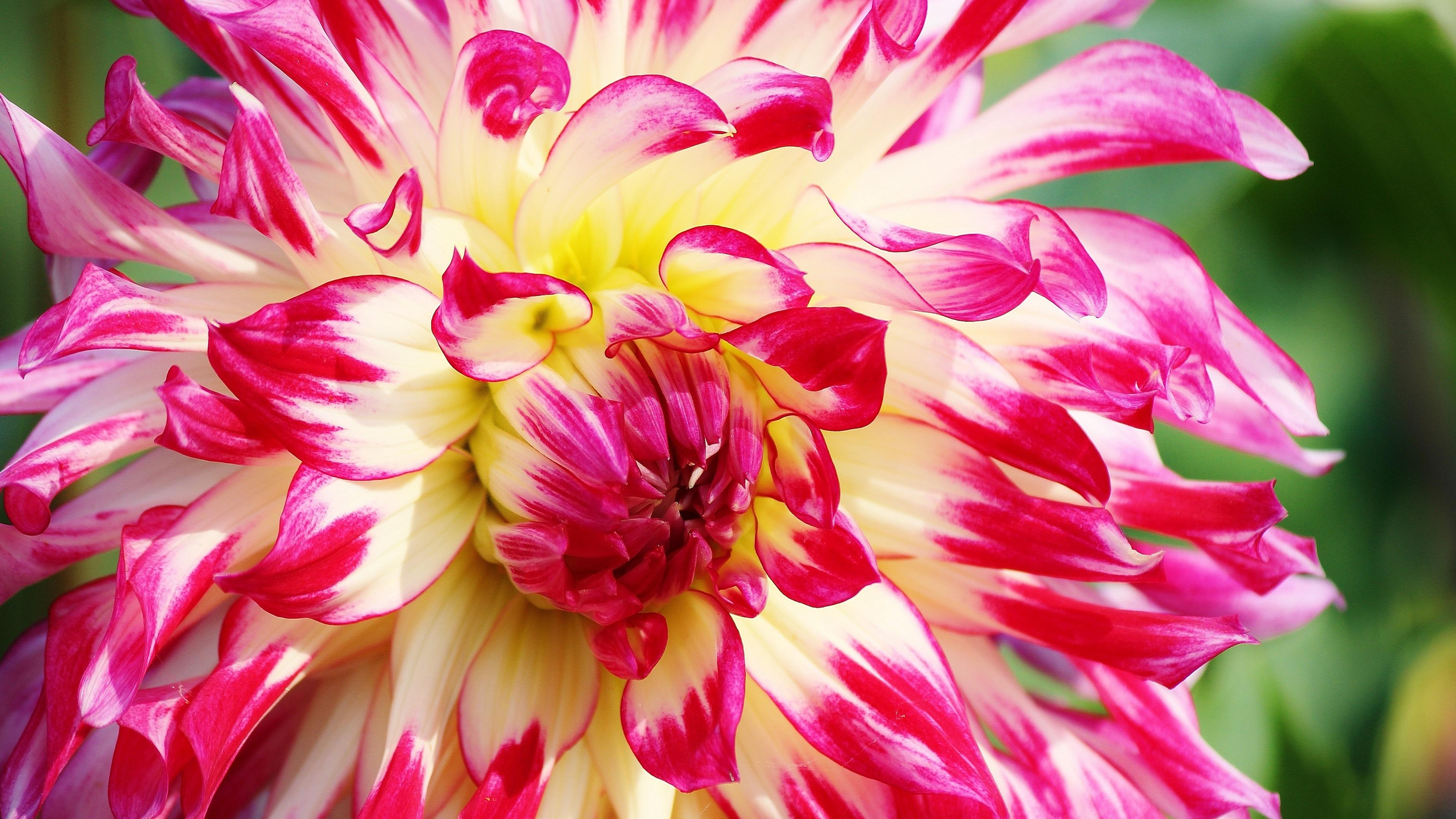 Hình ảnh hoa mùa xuân đẹp