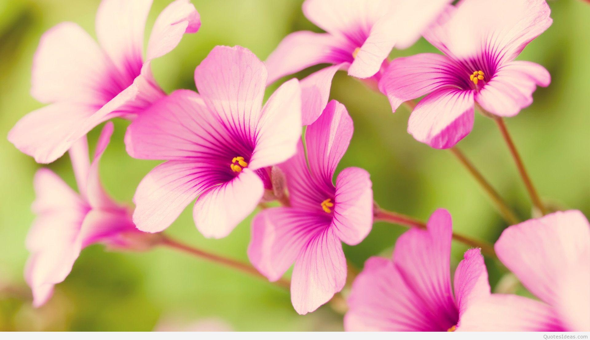 Hình ảnh hoa mùa xuân