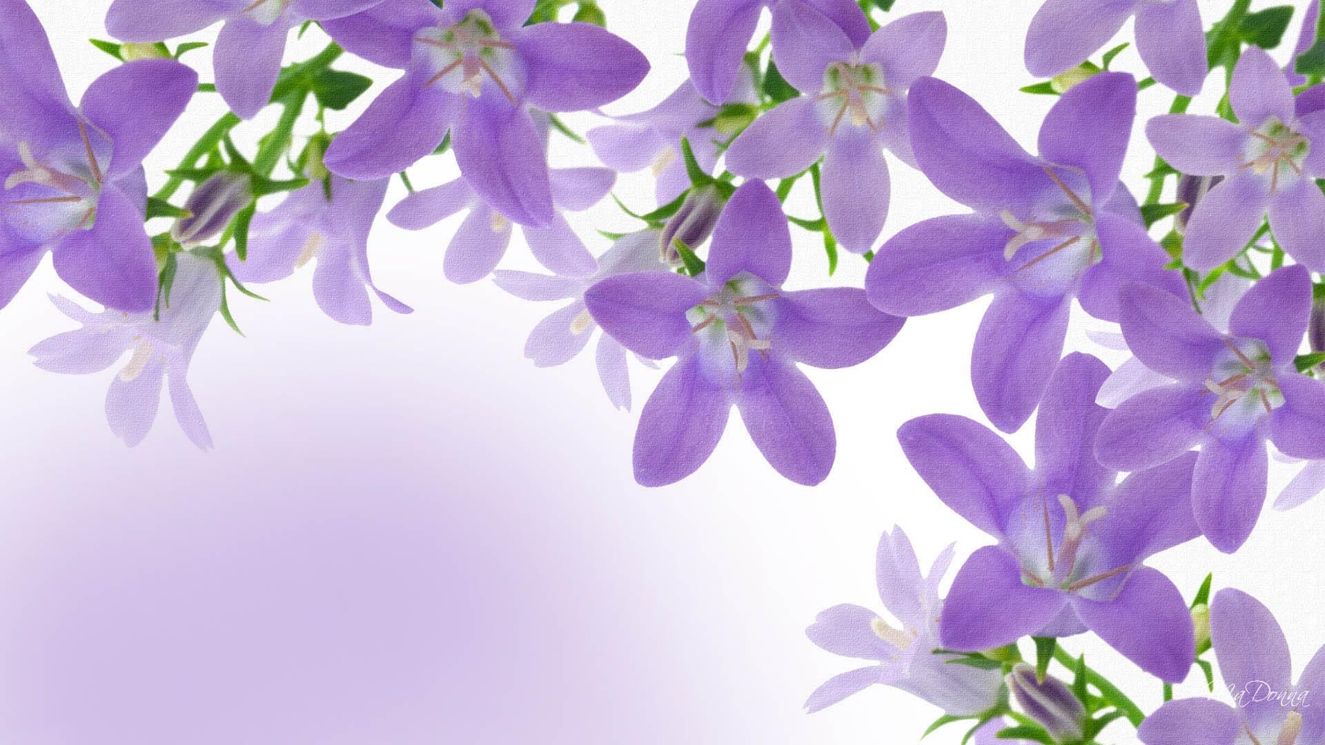 Hình ảnh hoa tím mùa xuân đẹp