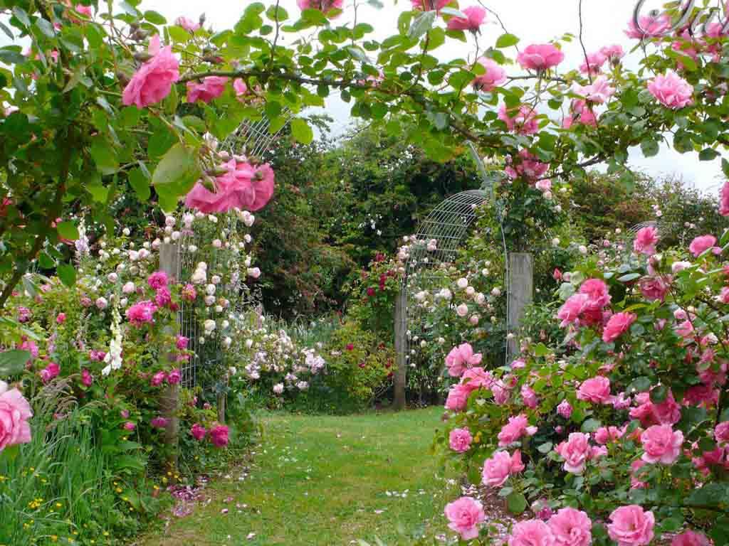 Hình ảnh khu vườn hoa hồng đẹp