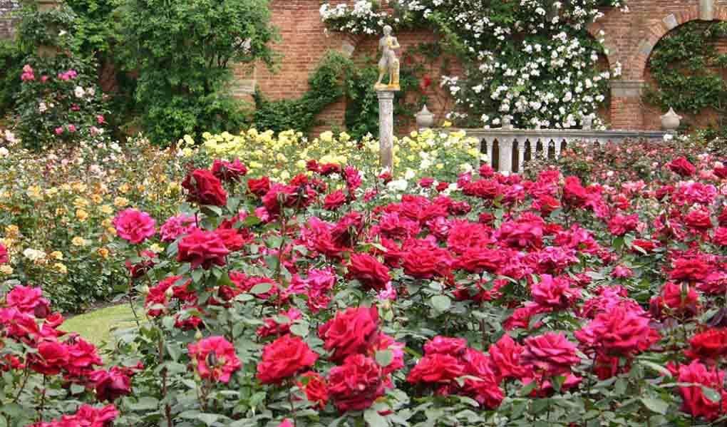 Hình ảnh khu vườn hoa hồng lãng mạn