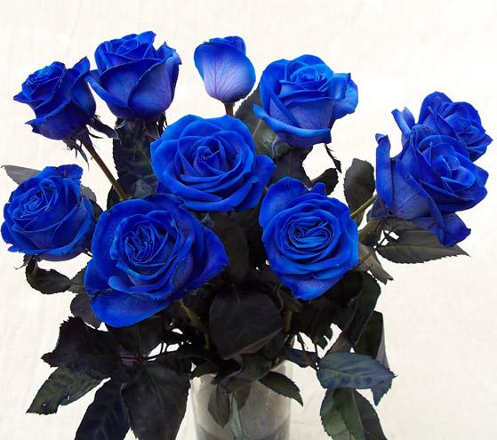 Hình ảnh lọ hoa hồng xanh đẹp