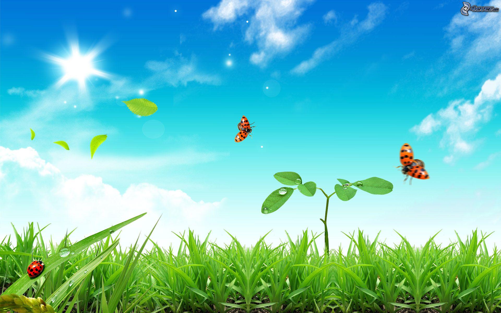 Hình ảnh mùa xuân đẹp (3)
