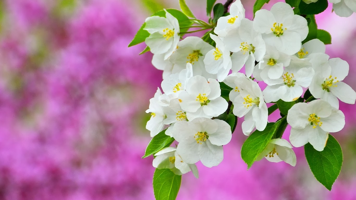 Hình ảnh mùa xuân đẹp nhất thế giới