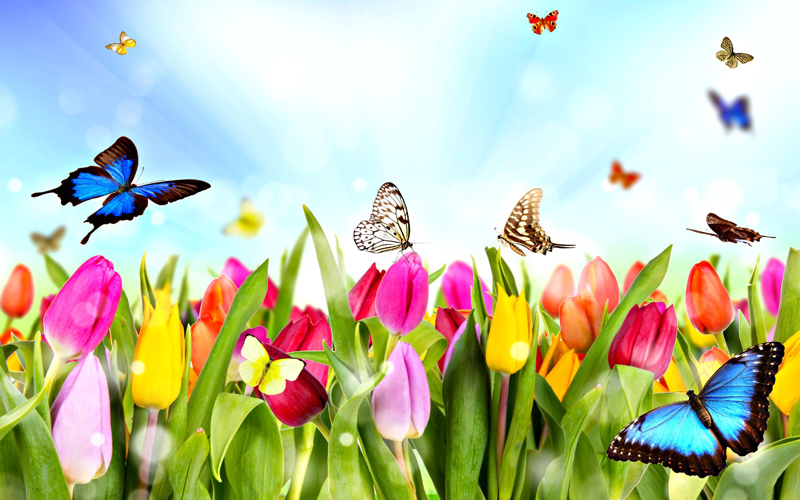 Hình ảnh mùa xuân hoa bướm đẹp (2)