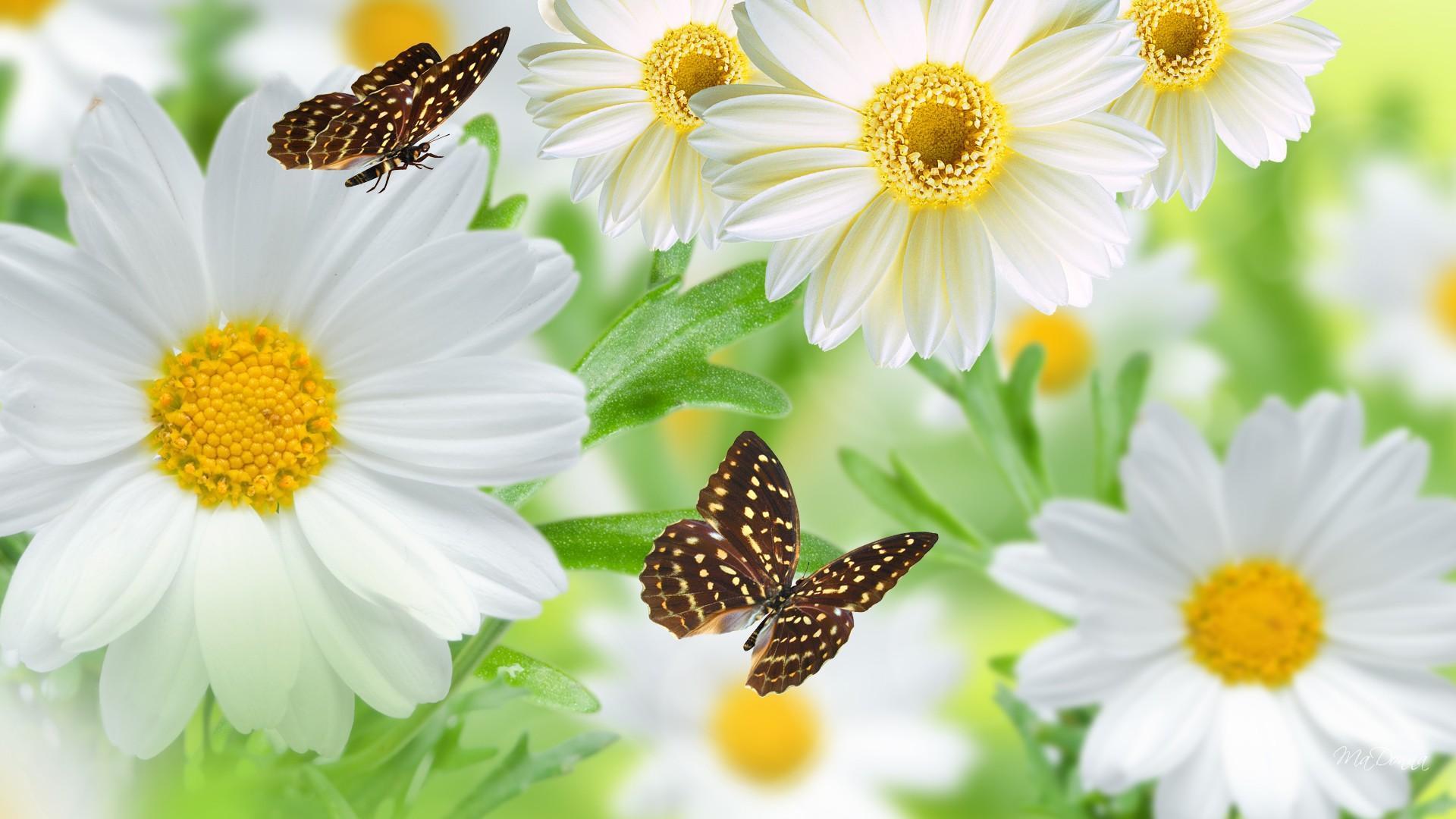 Hình ảnh mùa xuân hoa bướm đẹp (4)