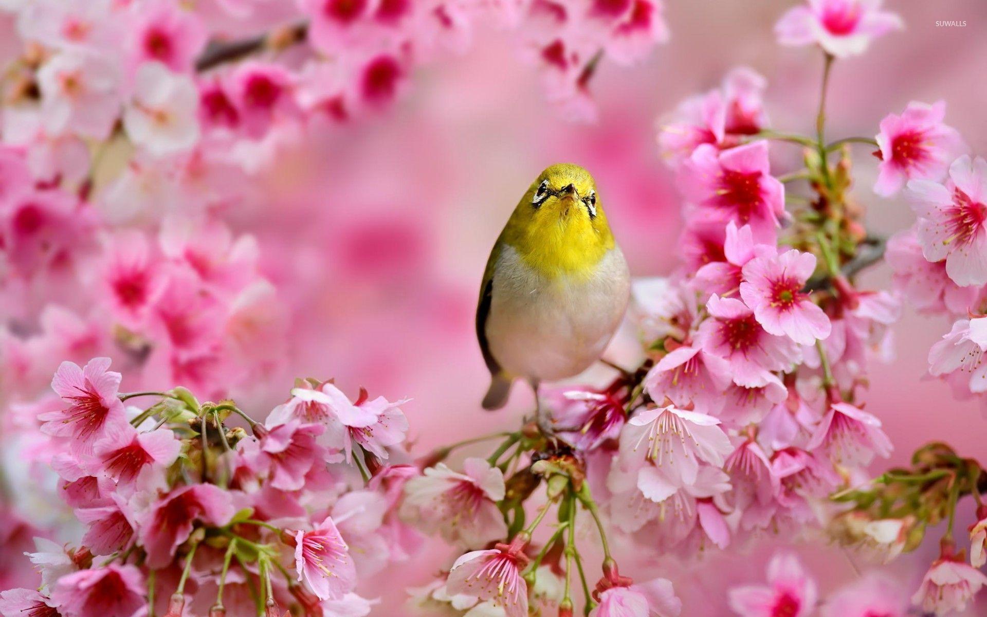 Hình ảnh mùa xuân hoa bướm đẹp