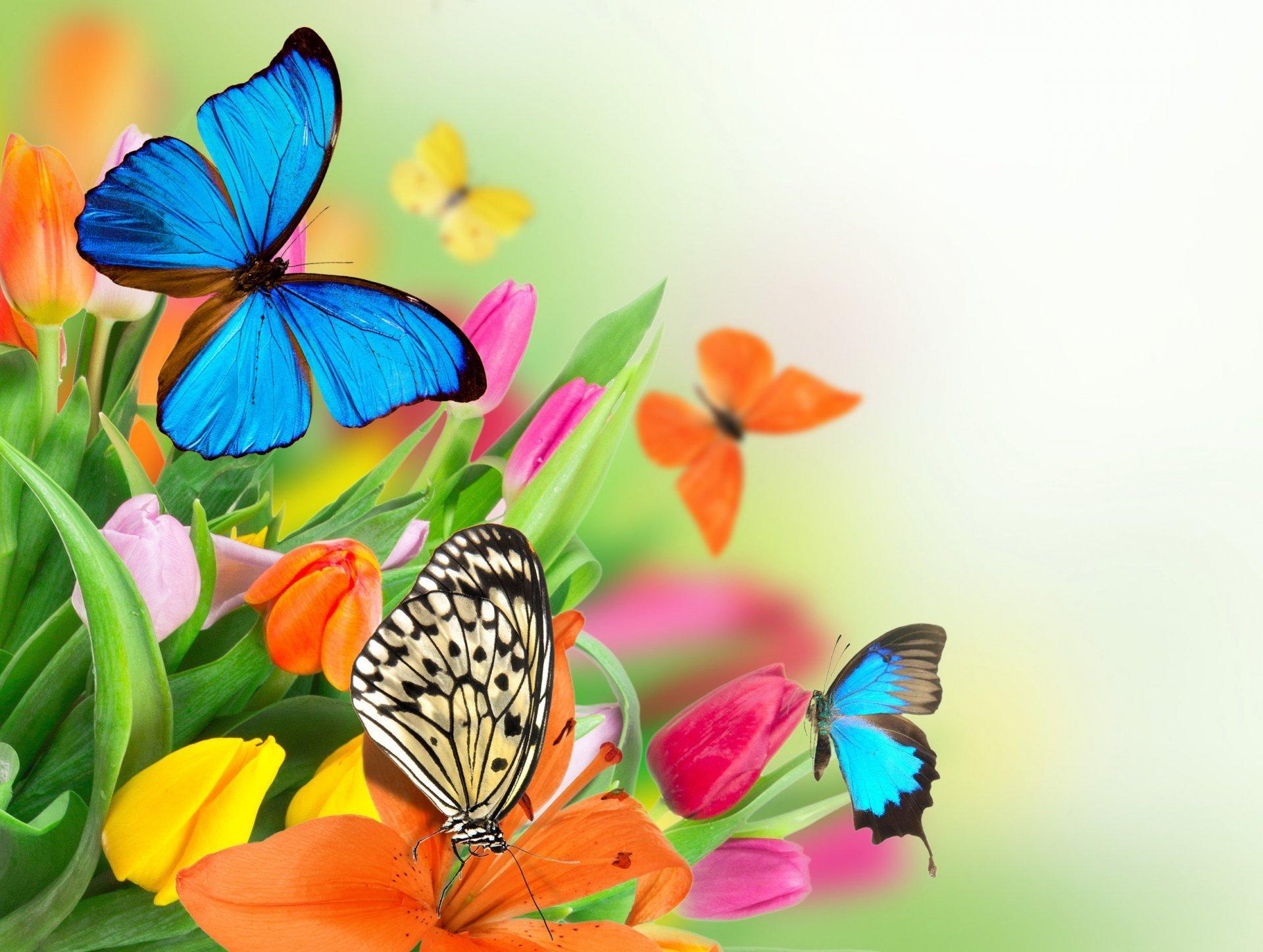 Hình ảnh mùa xuân hoa bướm khoe sắc đẹp