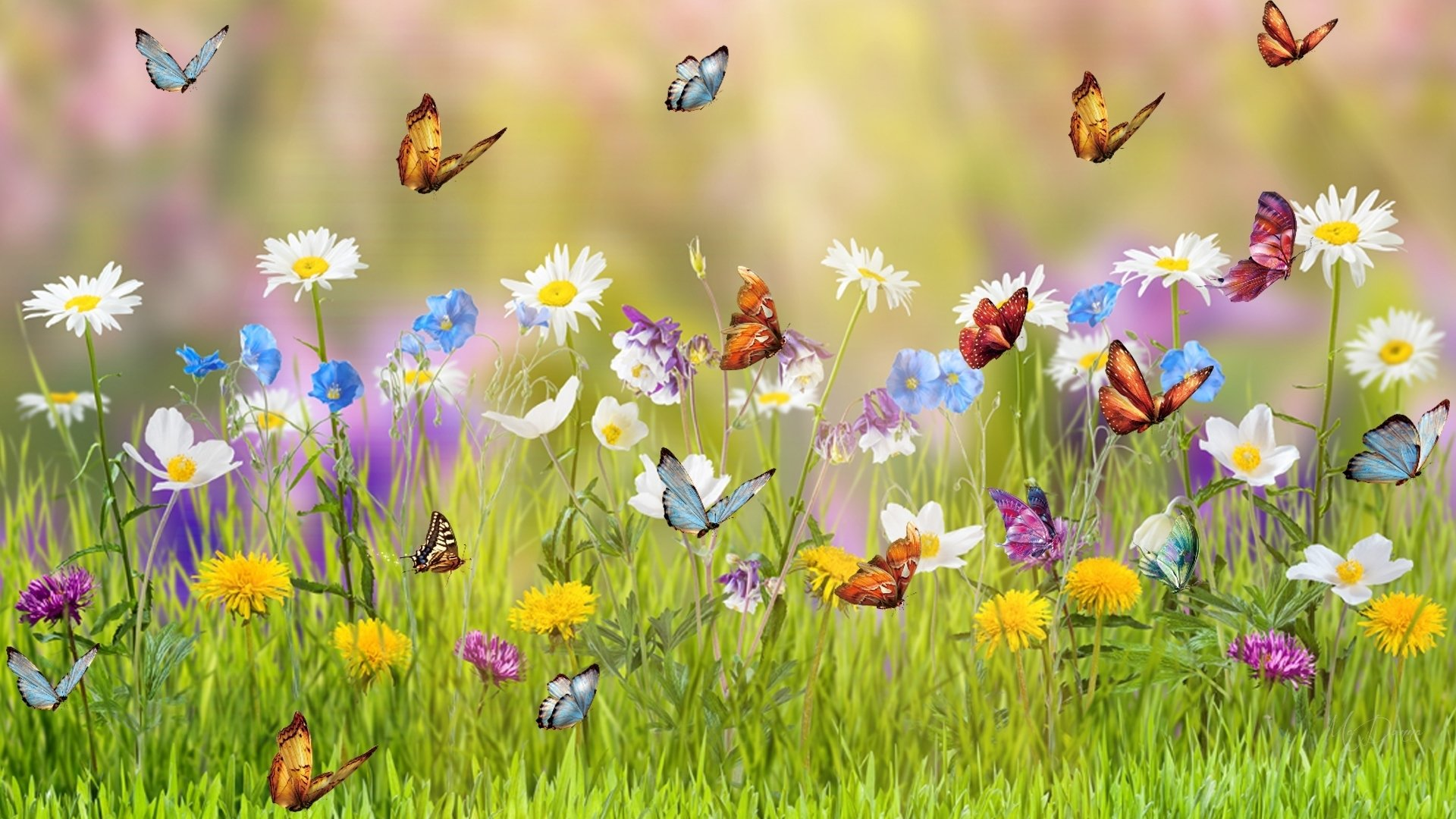 Hình ảnh mùa xuân hoa cỏ đẹp