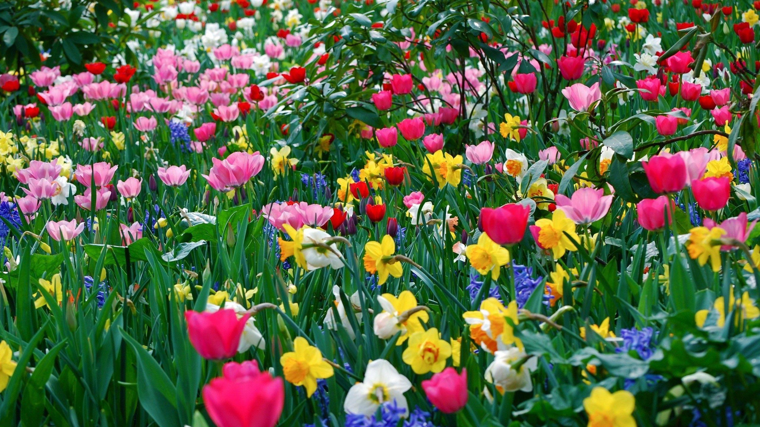 Hình ảnh mùa xuân vườn hoa nhiều sắc màu đẹp