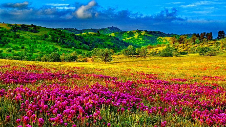 Hình ảnh mùa xuân vườn hoa tím giữa núi đồi đẹp