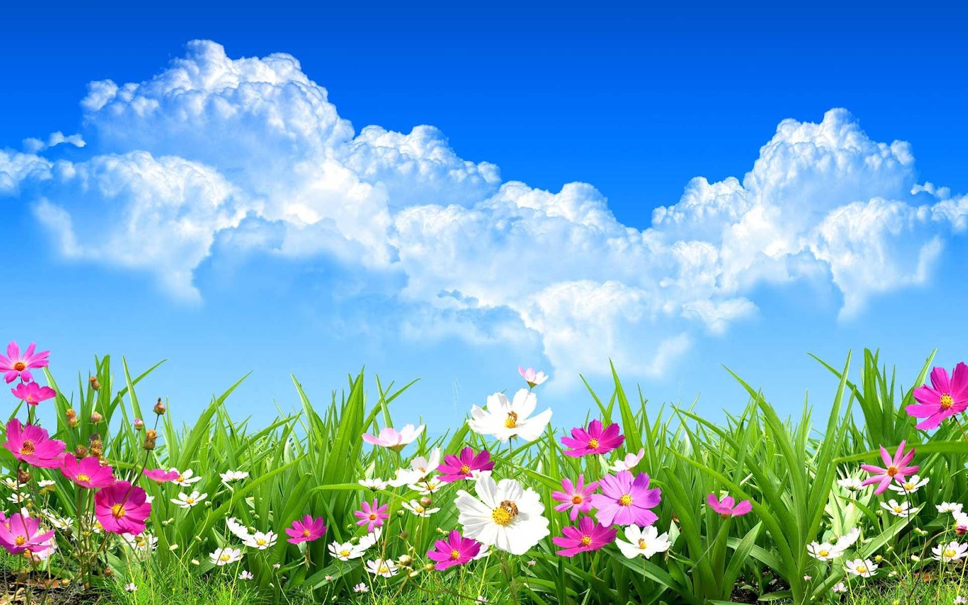 Hình ảnh mùa xuân