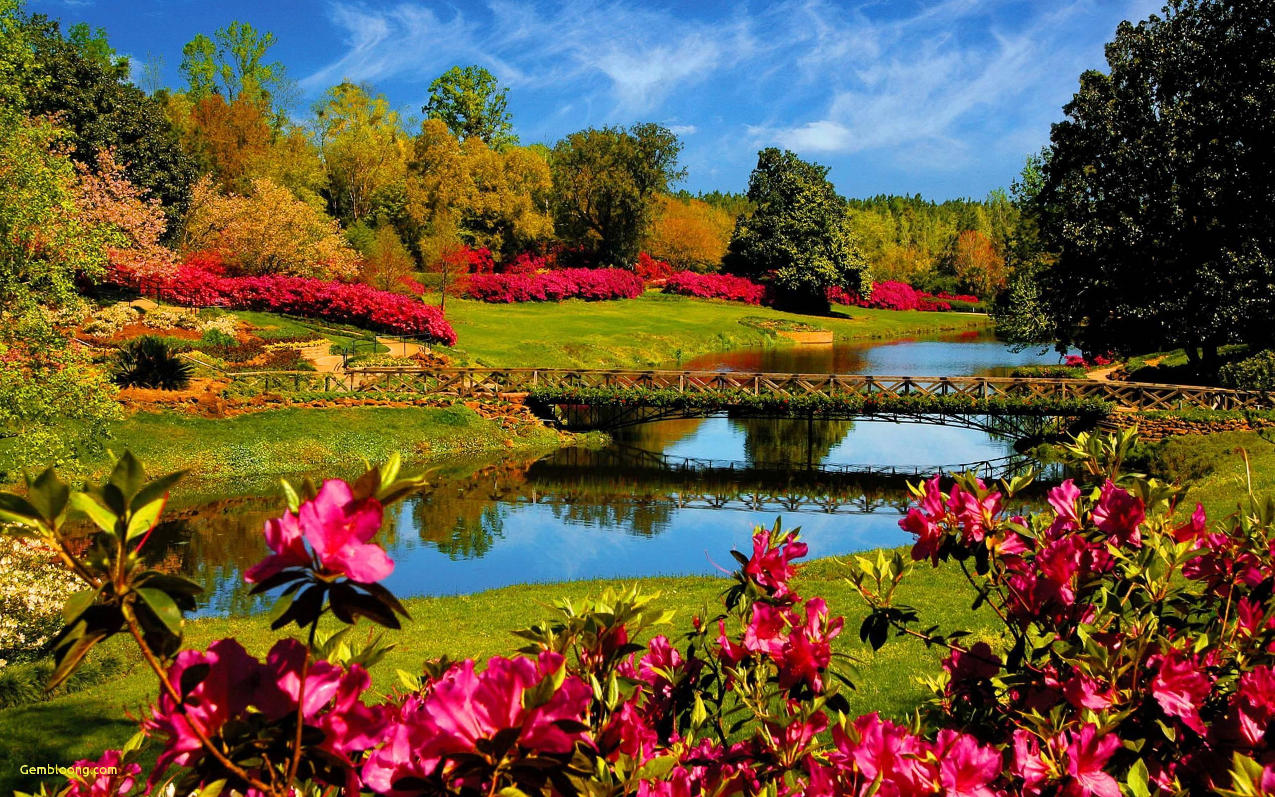 Hình ảnh thiên nhiên mùa xuân đẹp