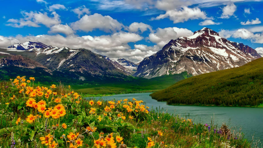Hình ảnh trăm hoa khoe sắc bên hồ