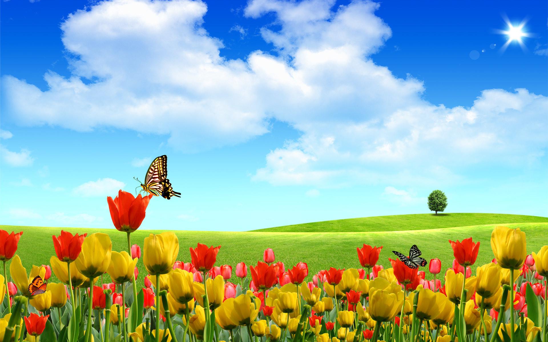 Hình ảnh về mùa xuân