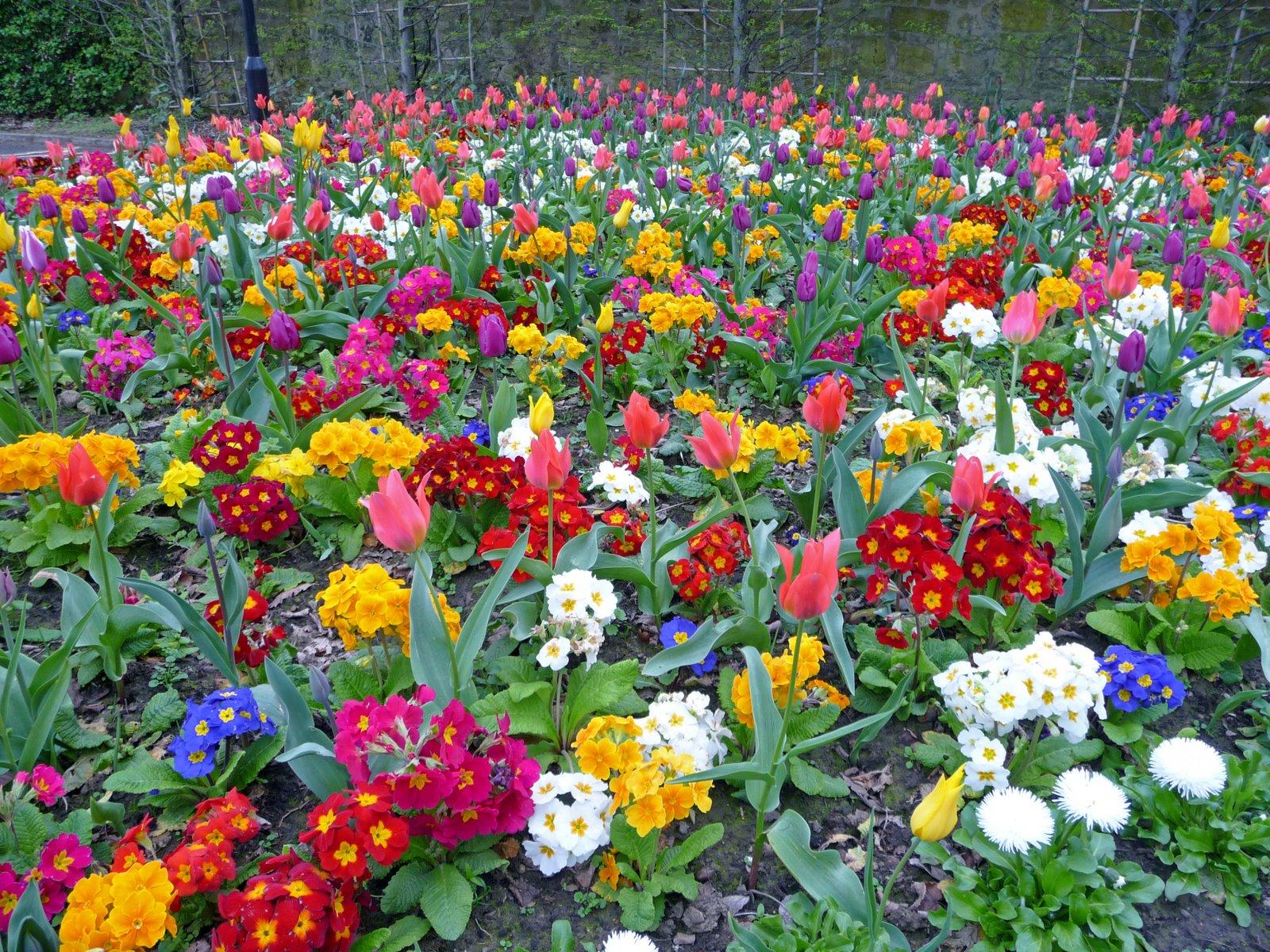 Hình ảnh vườn hoa mùa xuân đẹp (2)