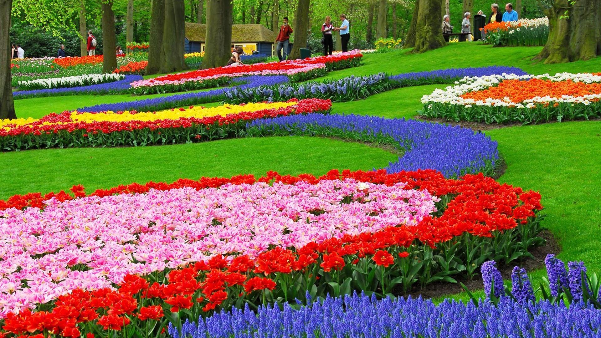 Hình ảnh vườn hoa mùa xuân đẹp