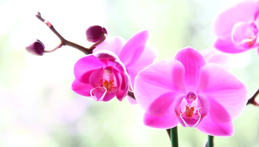 Ảnh hoa lan đẹp