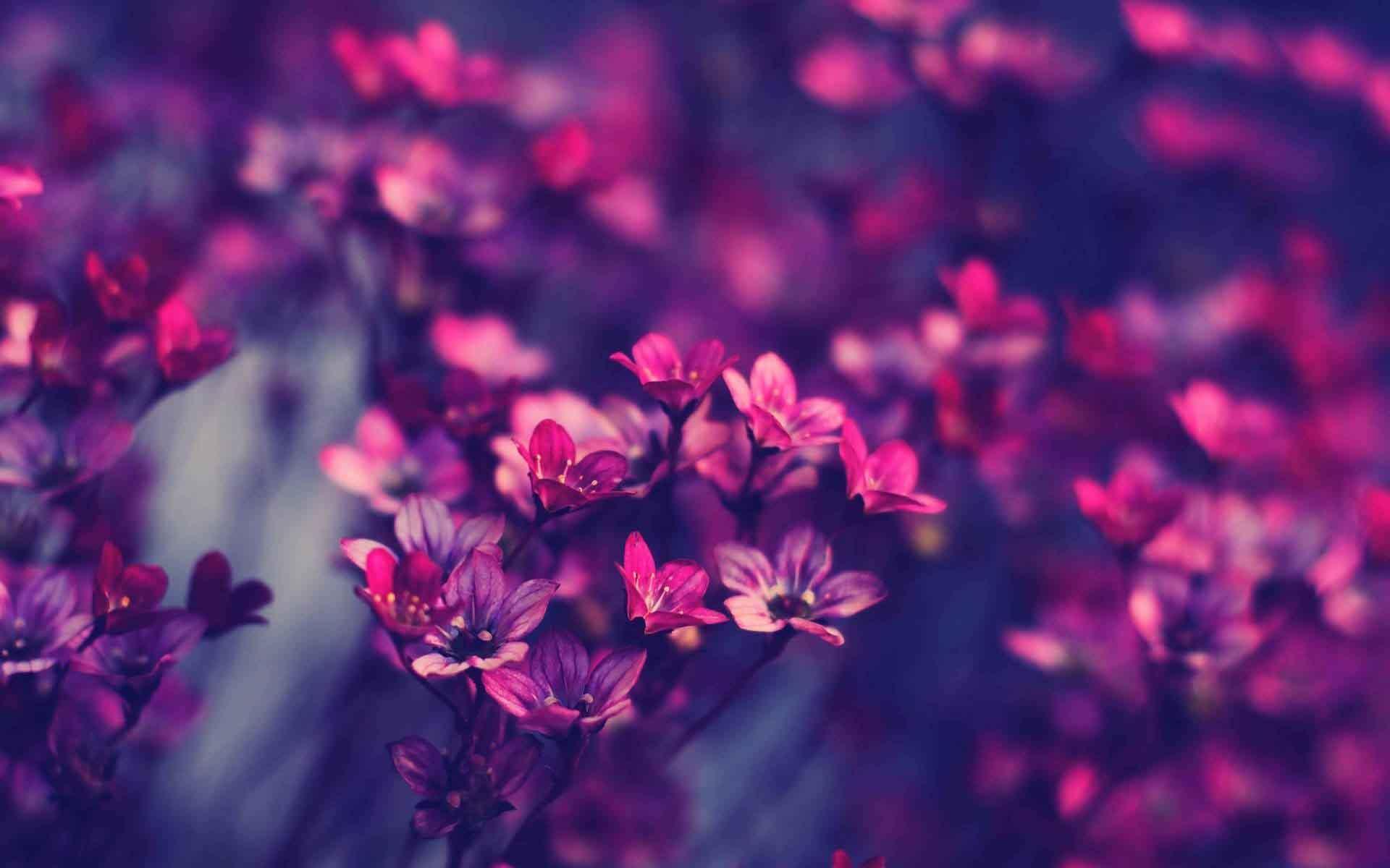 Ảnh hoa tươi đẹp nhất
