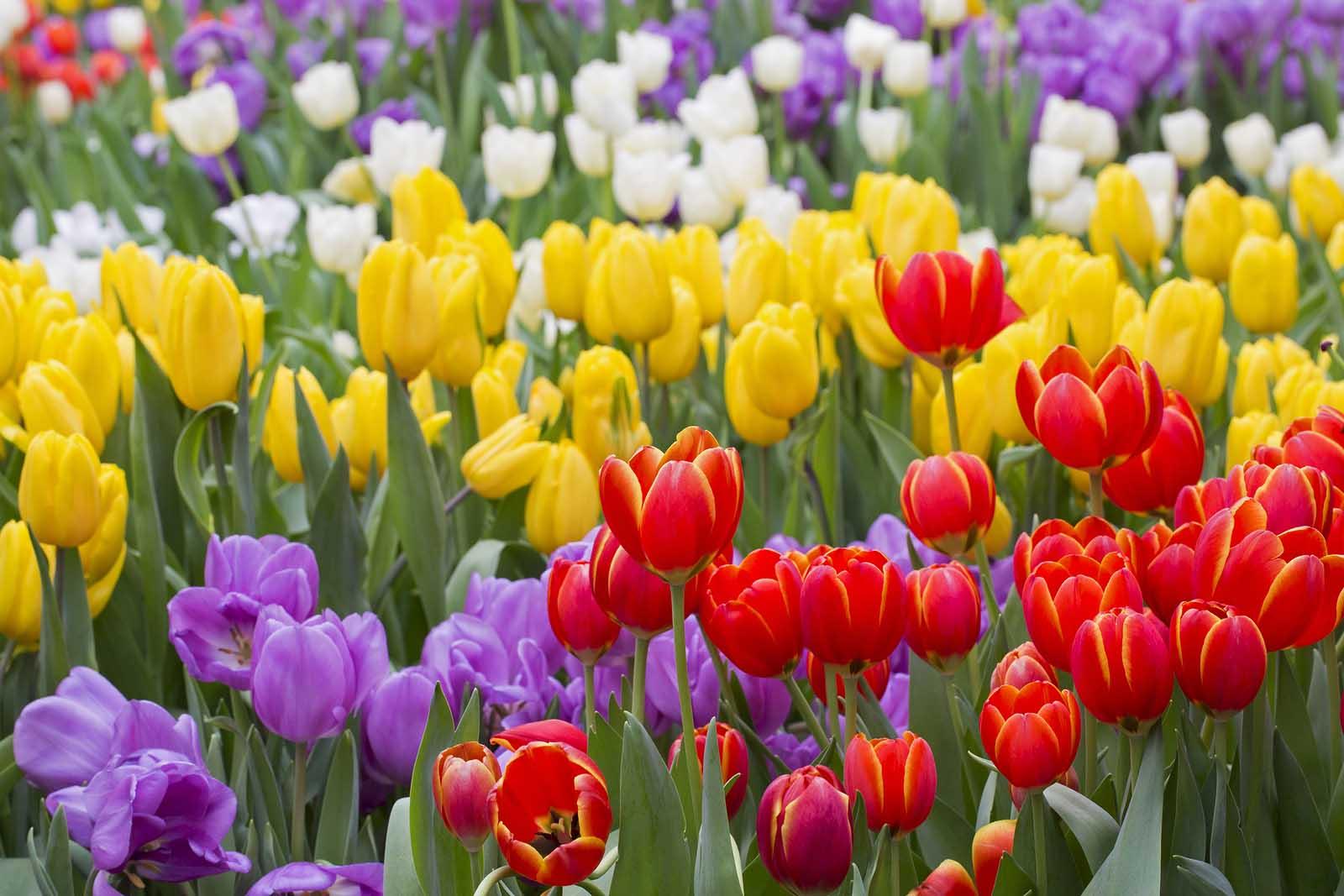 Hình ảnh hoa đẹp nhất