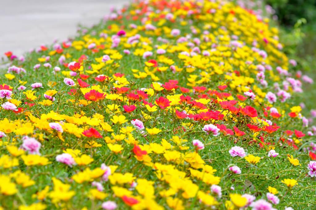 Hình ảnh những bông hoa đẹp nhất
