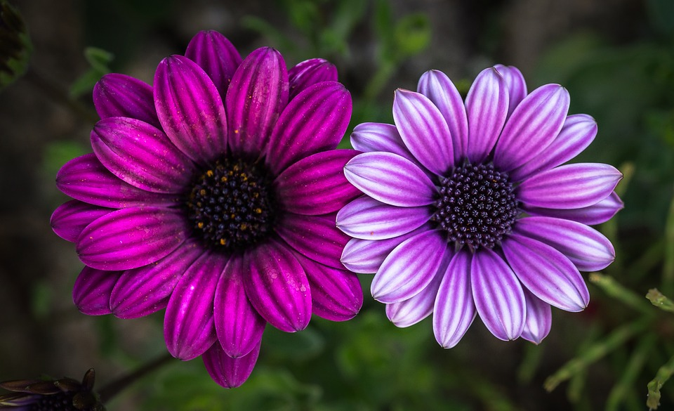 Hình hoa cúc đẹp